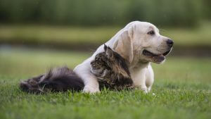 Cute dog lying on the ground with leg over cat
